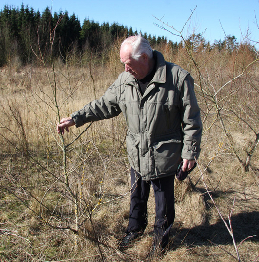 hektar til tønder land