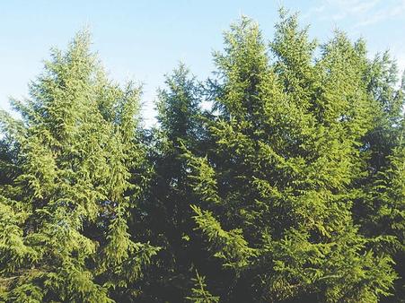 træarter