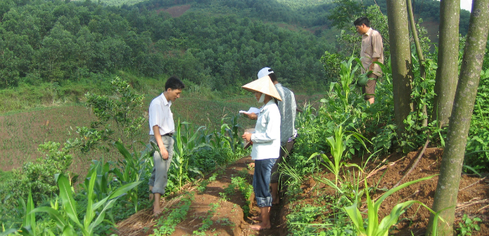 Farm forestry in Vietnam